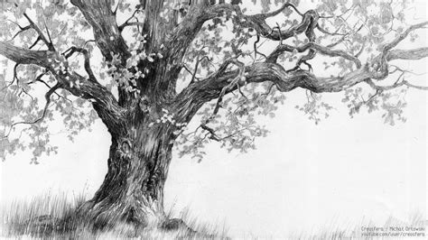 oak tree drawing oak tree tutorial by micorl on deviantart