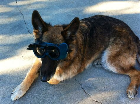r dogs r dogs on pholder 1000 r dogs images that made the world talk