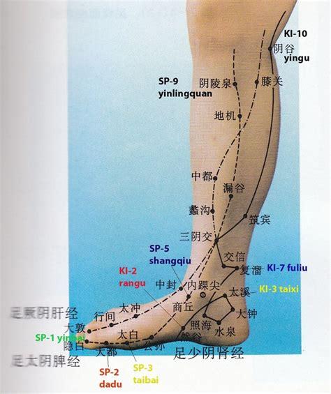 dolore interno gamba shu antichi della gamba e ginocchio