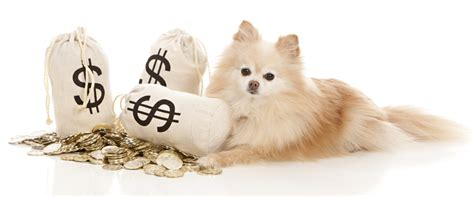 how much money is a puppy how much do puppies cost dogs help