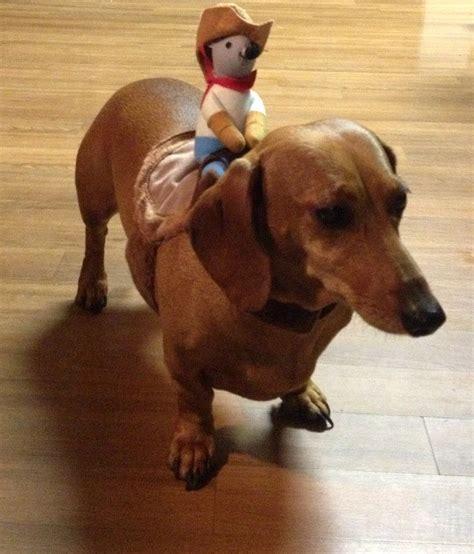 weiner costumes get a dachshund costume doxie an adventure