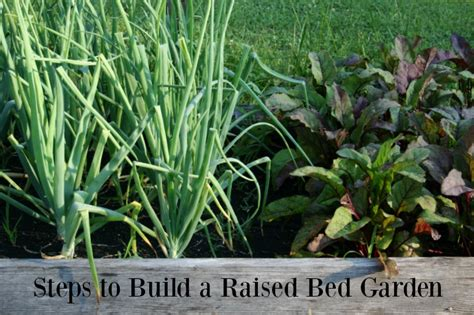 build a raised vegetable garden bed steps to build a raised vegetable garden bed home garden