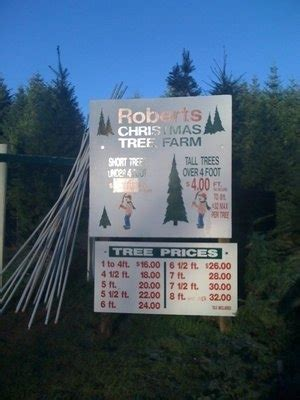 best christmas tree farm applehill prices apple hill tree farms trekaroo