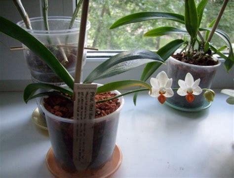 cara menanam anggrek hidroponik dengan mudah flora dan fauna