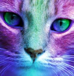 colorful cat colorful cat by rcdevils on deviantart