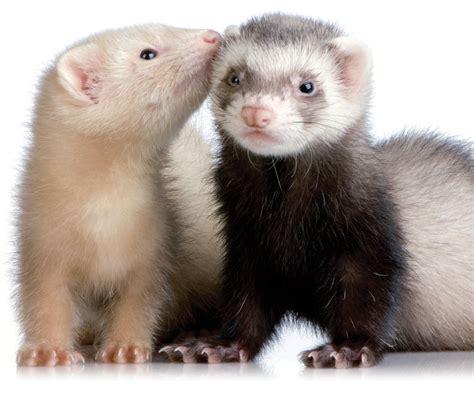 фото животных в природе диких