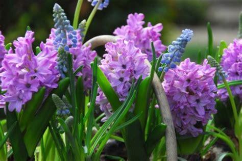 Hilfe Bei Gartengestaltung 1388 by Fr 252 Hling Im Handumdrehen Garten Pflanzen News