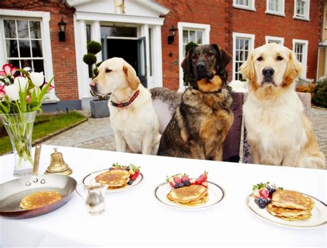 Dogs At Dinner Table by White Wolf Amazing Pictures Show Dogs Enjoying Feast At The Dinner Table