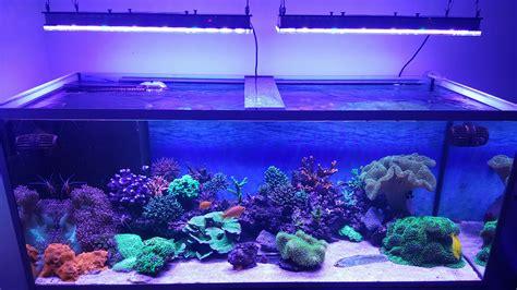 Lu Led Untuk Aquarium klien jerman menunjukkan oleh orphek atlantik v3 s orphek