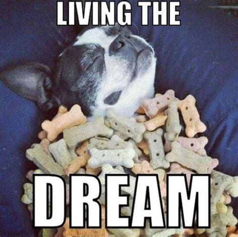 puppy dreams living the funnydogsite