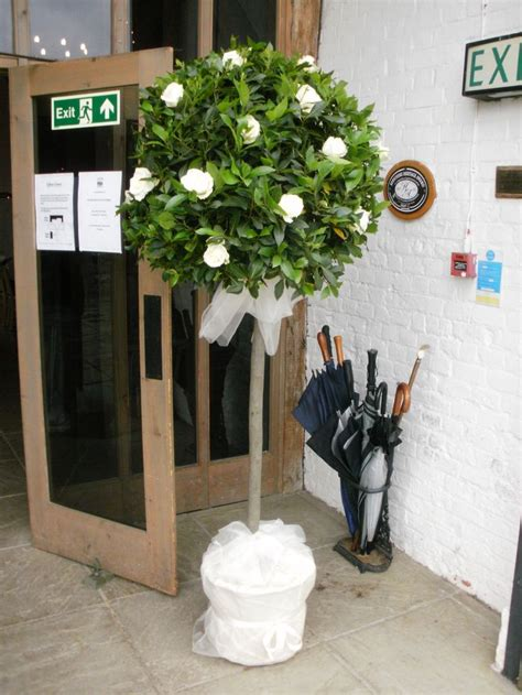 wedding topiary ideas topiary tree with white roses wedding venue flowers