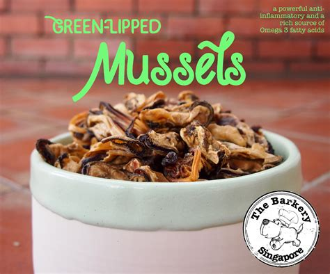 green lipped mussel side effects dogs hairsstyles co