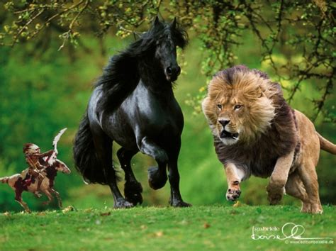 imagenes de la vida salvaje imagen vida salvaje grupos emagister com