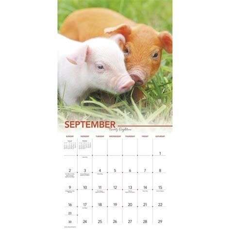 lovable pigs 2018 wall calendar calendars com