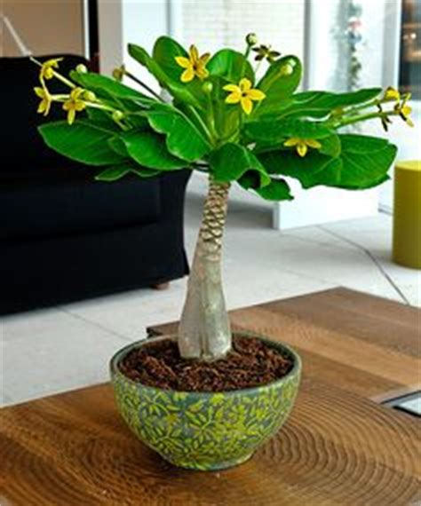 unusual houseplants 1000 ideas about unusual plants on pinterest woodland