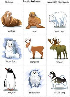 1000 Images About Arctic Animals - 1000 images about arctic animals theme on