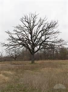 Walking slow bare trees