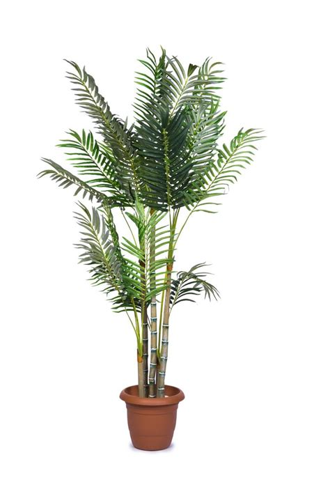 areca palm soothing plants for more oxygen and better sleep
