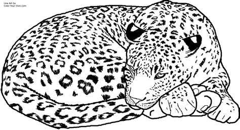 Leopard Print Coloring Pages sleepyhead leopard coloring page