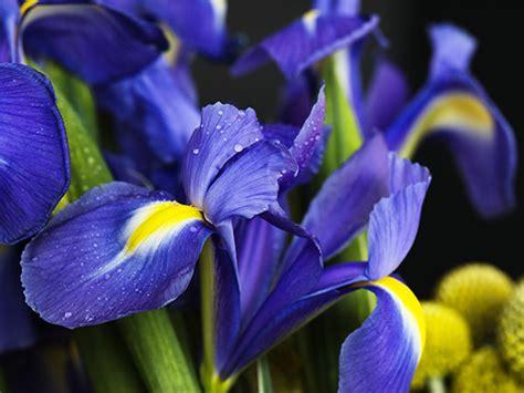 fiori foto e nomi nomi e immagini di fiori di primavera 35 foto