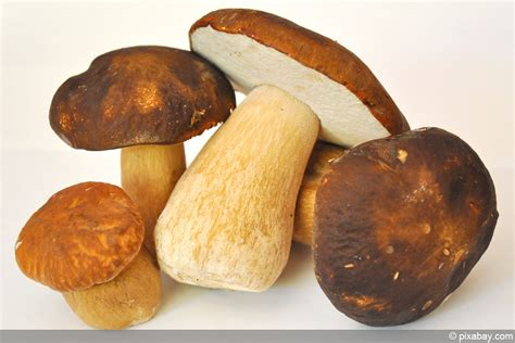 Weiße Pilze Im Garten by Beliebte Waldpilze Essbare Pilze Erkennen Fotos