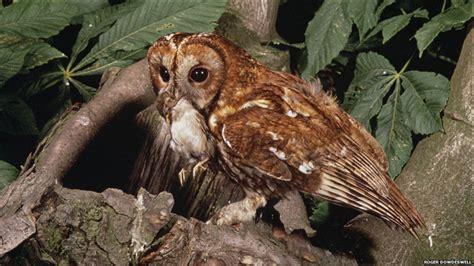 imagenes de animales impactantes bbc mundo las fotos m 225 s impactantes de la naturaleza en