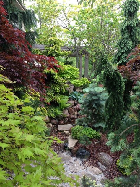 japanese maples and conifers the gardens pinterest