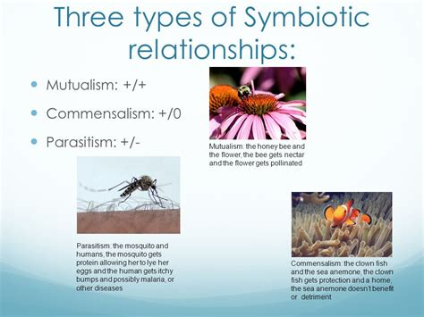 symbiotic relationships ppt