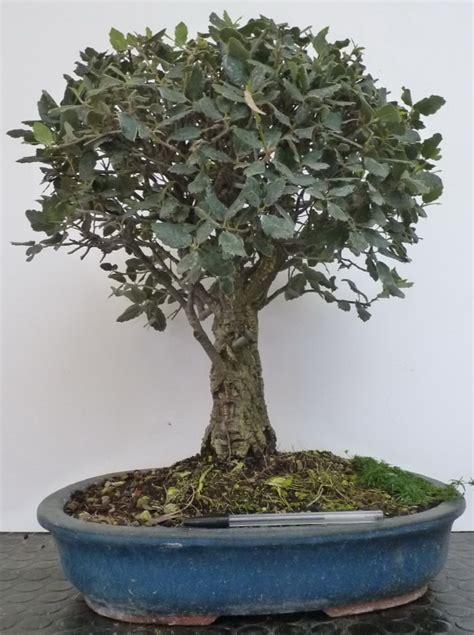vendita vasi bonsai vasi bonsai tutte le offerte cascare a fagiolo