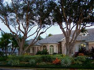 Sarasota Landscape Lighting - large tree trimming services for large trees near or next to house in bradenton florida