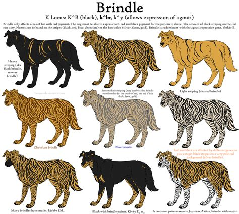brindle puppy names for dogs brindle color breeds picture