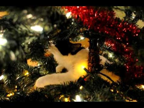 xmas tree made out of cats black and white cat climbing tree