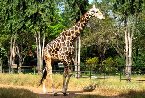 Garden City Zoo Animals Mysore Tourist Places City Of Palace Travel Guide India