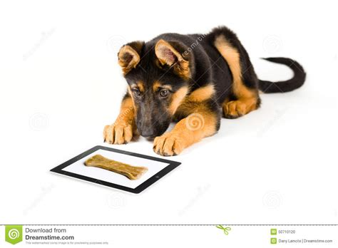 puppy at puppy looking at bone on a tablet computer stock photo image 50710120