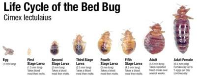 bed bugs in bed bed bug bakersfield ca bez valley pest