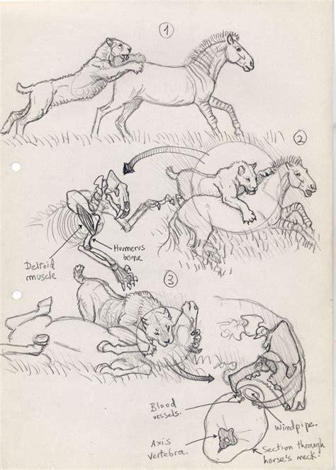 doodle draw animals sabertooth diaries 1 excavating sketches portfolio