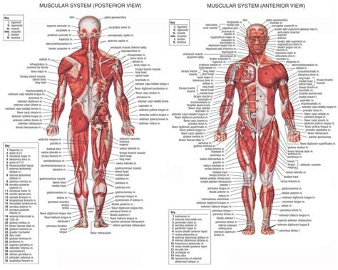 Physiology Images