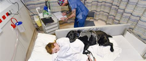 kid in hospital bed loyal dog jumps on hospital bed to comfort 9 year old boy