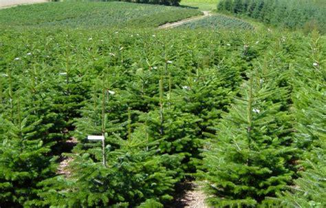 Sapin En Pot Terrasse by Sapin En Pot Pour Terrasse Sapin En Pot Pour Terrasse