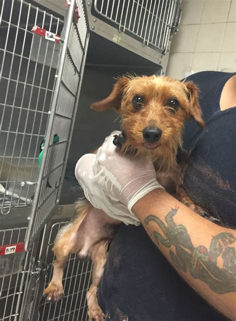 pit bull  yorkshire terrier rescued  hot bubbling
