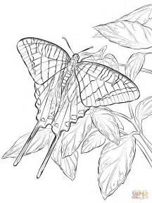 zebra butterfly coloring page zebra swallowtail butterfly coloring page free printable