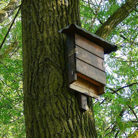 Wandklappbett Selber Bauen 1305 by Wandklappbett Selber Bauen Vogelhaus Selber Bauen