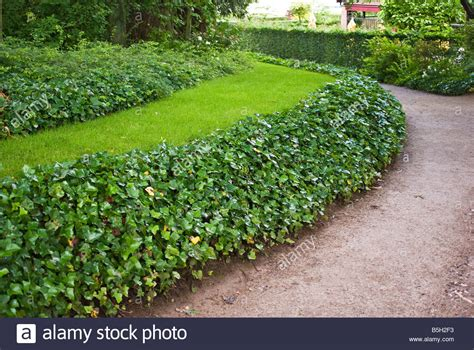 Landscape Edging Plants Effective Use Of Ground Cover Plants As Lawn Edging In