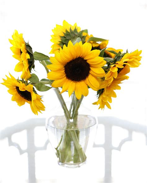 Sunflowers In Vase by Vase Of Sunflowers By Marilyn Hunt
