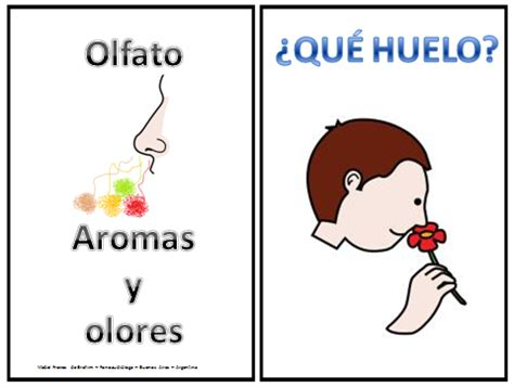 mabel freixes fonoaudiologa argentina sentido del olfato