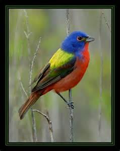 rainbow colored bird rainbow bird by natureshooter on deviantart