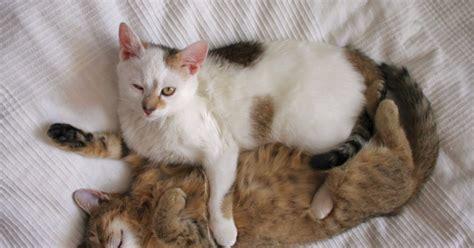 katze kotet in die wohnung eine oder 2 katzen gute gr 252 nde gegen einzelhaltung katzen