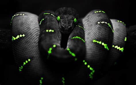 Wallpaper Black Mamba Snake | black mamba snake wallpaper download hd black mamba