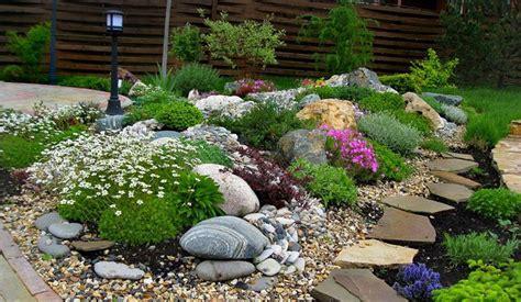 fiori per giardino roccioso fiori per giardino quali scegliere il verde