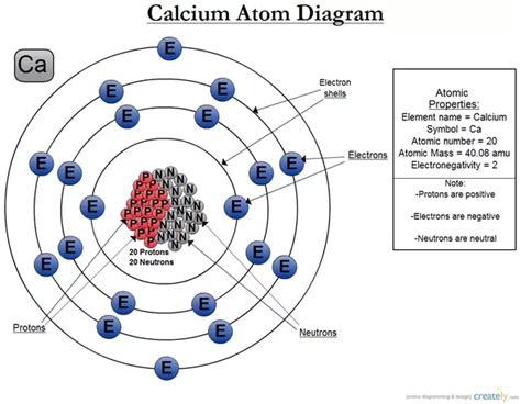 Number Of Protons In Calcium by Calcium Is An Element What Type Of Atoms Is It Made Out